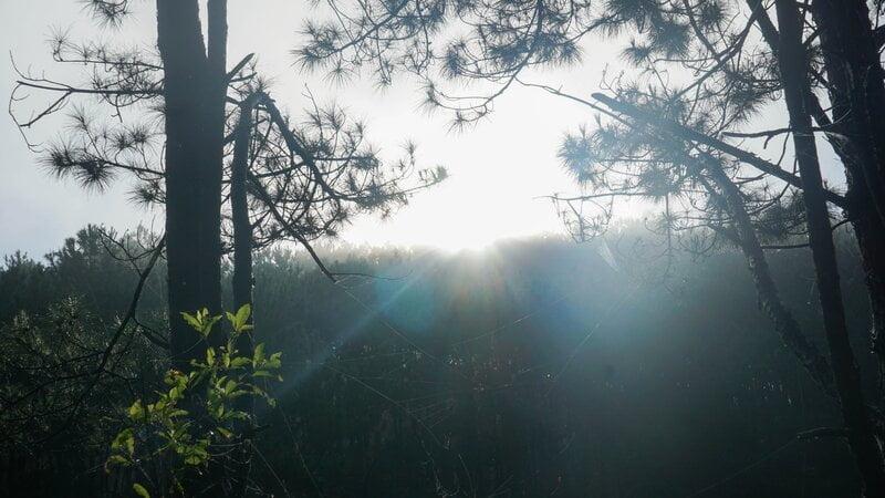 Thức dậy và đón bình minh nơi núi rừng