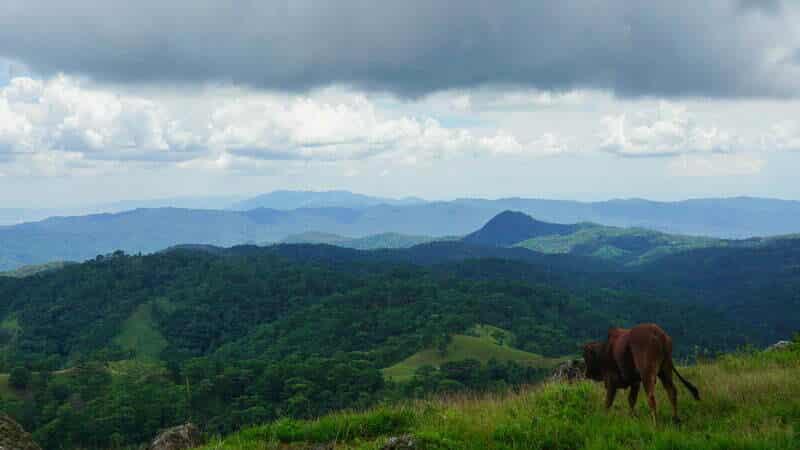Toàn cảnh núi đồi Tà Năng Phan Dũng