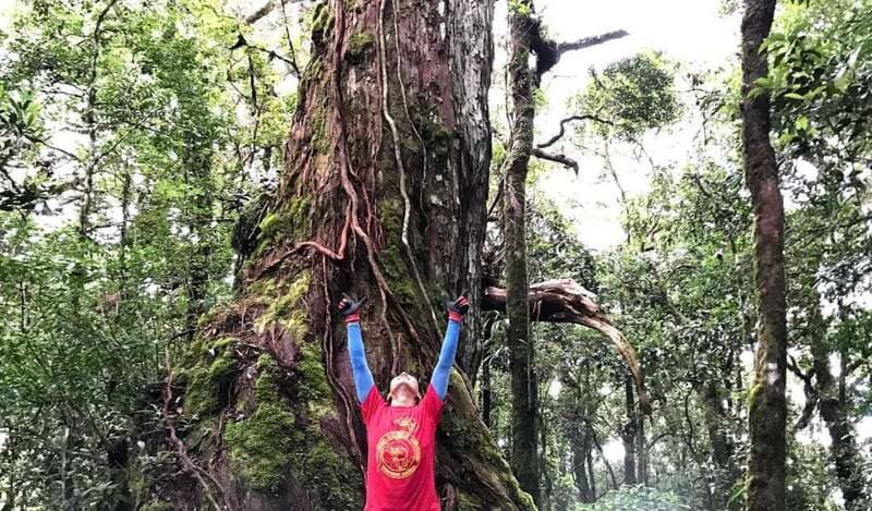Cây Powmu 1300 ở vườn quốc gia Bidoup Núi Bà