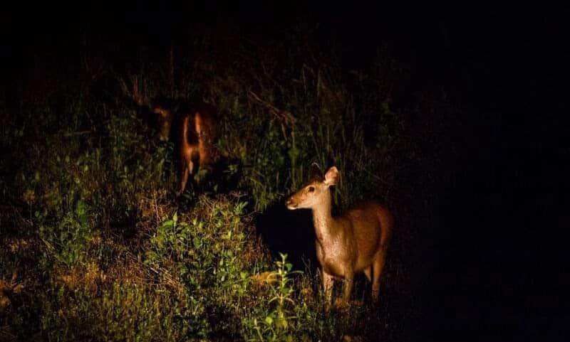 Trải nghiệm cực thú vị tìm hiểu cuộc sống về đêm của các loài động vật