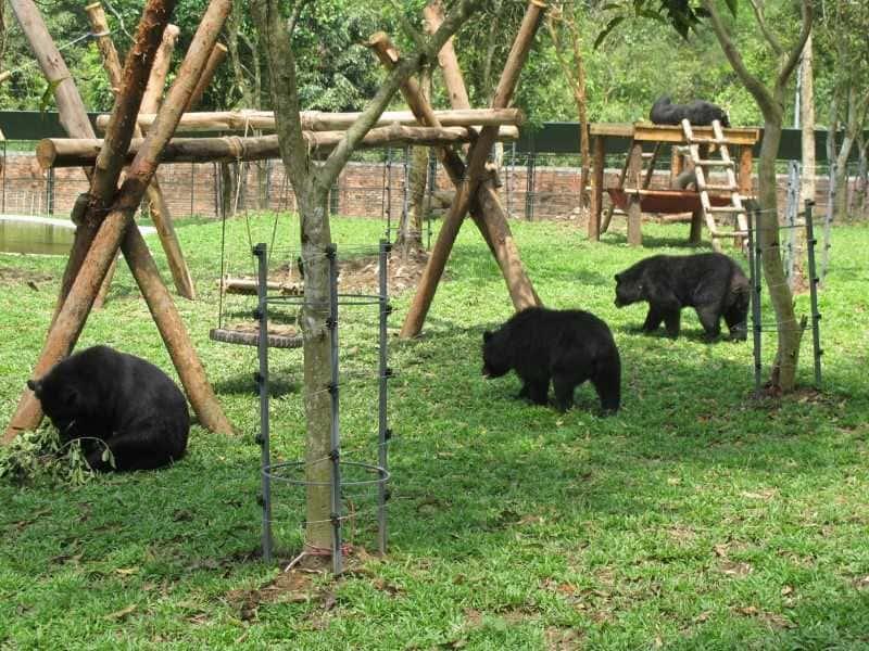 Những chú Gấu đen cực đáng yêu